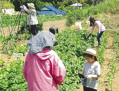 野菜づくりに親子で挑戦