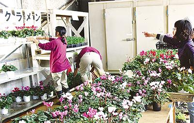 生徒栽培の作物ずらり