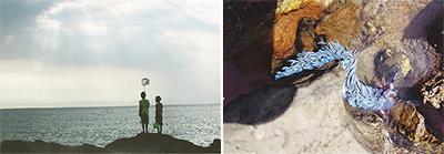 三浦の海の魅力活写
