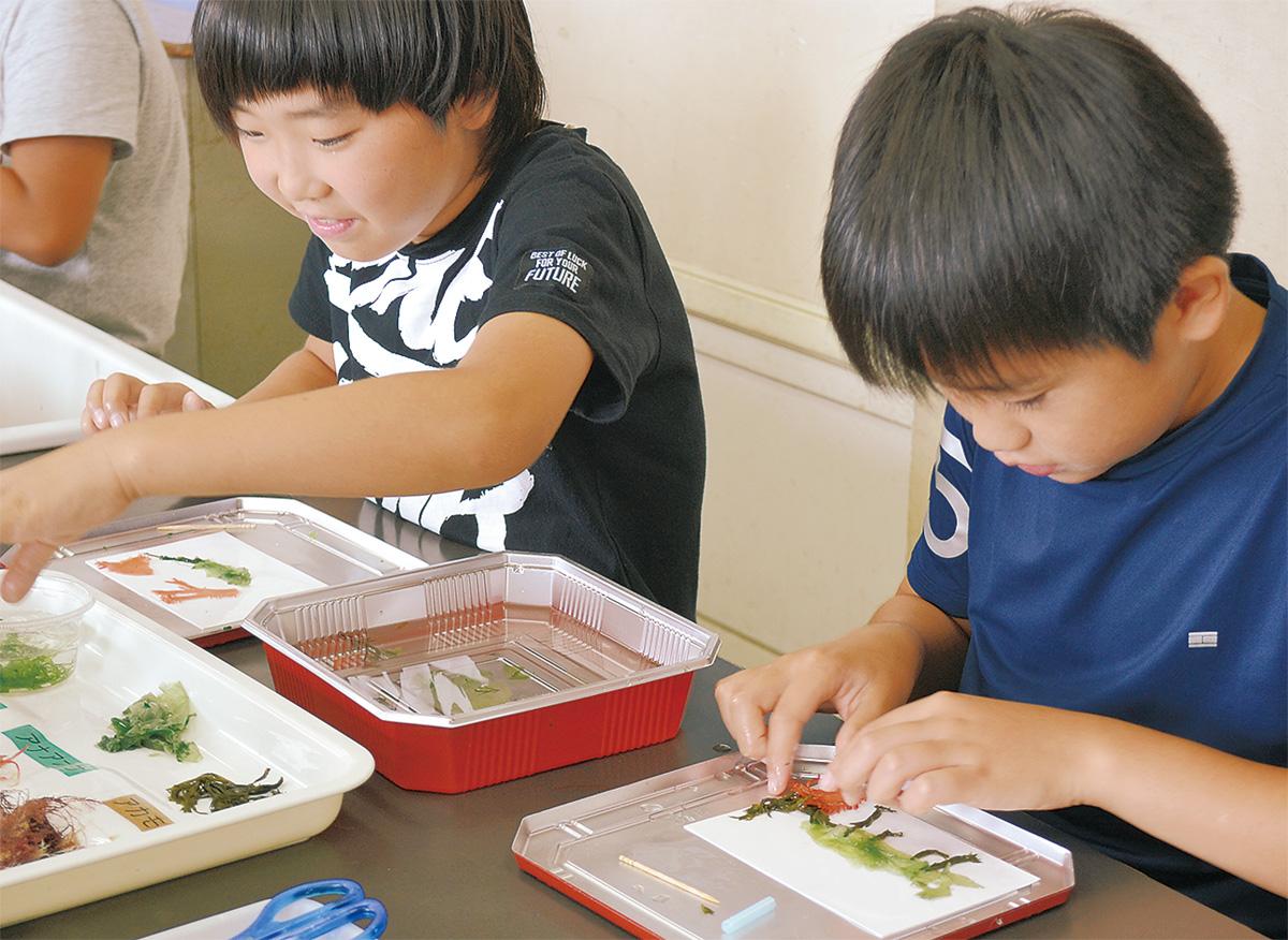 海藻アートで環境学ぶ