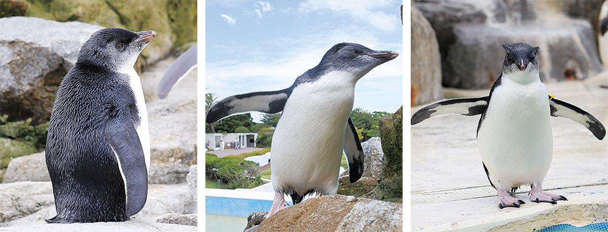 赤ちゃんペンギンを命名