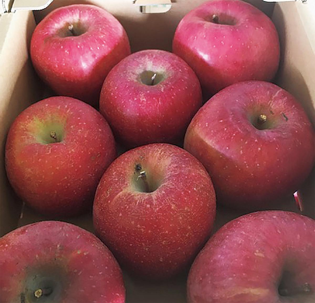 須坂産りんごを特価販売