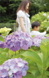 紫やピンク、白など色とりどりの花が訪れる人の目を楽しませている