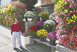 約40種が色鮮やかに咲き誇る「立ち懸崖菊」と加茂さん(=桜山の自宅前)。4日現在で7分咲き程度、今月中旬頃までが見頃という