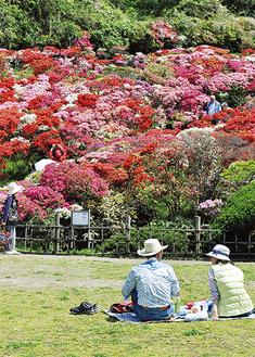 満開のツツジで花見を楽しむ見物客ら(=19日、同公園)