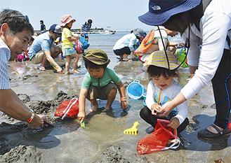 親子で潮干狩りに興じる参加者(=21日、一色海岸)