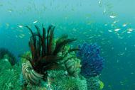 逗子の海の豊かさ活写