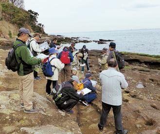 荒崎海岸での見学会の様子(同会提供)
