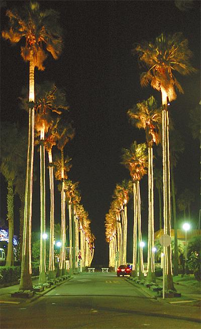 光のヤシ並木、幻想的に