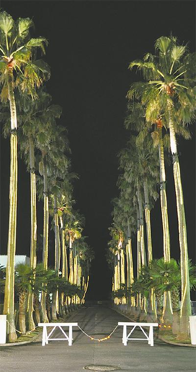夜のマリーナ 光で彩り