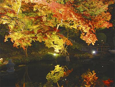 夜空に色づく紅葉