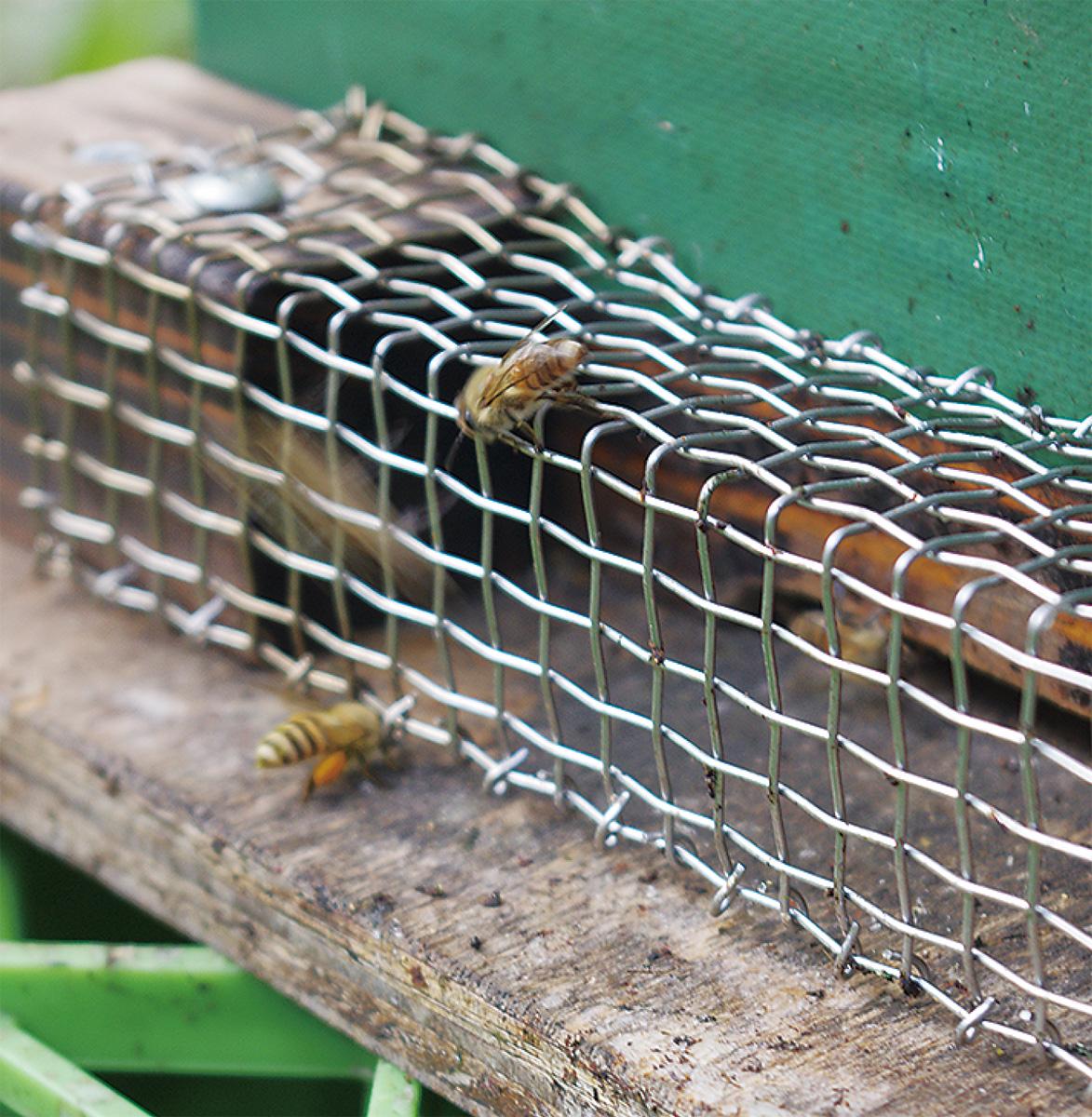 ミツバチなしでは生きられない?