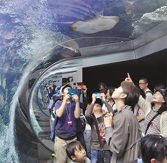巨大エイを見てはしゃぐ福島の子どもたち