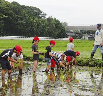 藤沢ライオンズクラブメンバーの指導を受け、丁寧に苗を植える児童ら