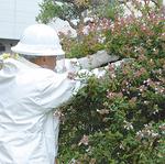 防護服に身を包む専門業者が植え込みの中に作られたスズメバチの巣を駆除
