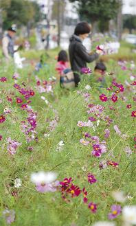 紫やピンク、白など鮮やかな花が咲く会場には、子ども連れの家族も多く見られた