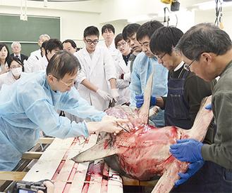 講師が解剖をする様子を見守る受講者。胎内には20匹の胎児も確認できた