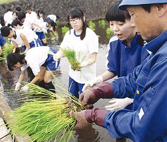 苗の植え方を学ぶ生徒たち