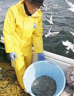 解禁で大漁に期待