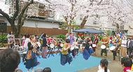 辻堂で桜祭り