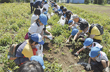ジャガイモ収穫初体験