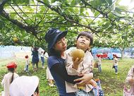 園児180人が梨狩り