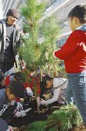 クロマツを新庁舎へ植樹
