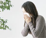 スギ花粉に「舌下免疫療法」