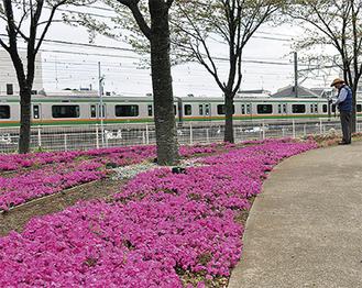 JR辻堂駅西口から徒歩圏内にあるさくら広場(=9日撮影)