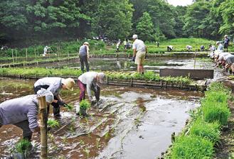 田植えに精を出す援農クラブのメンバーら