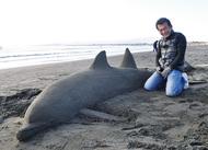 人と縁つなぐ「砂イルカ」