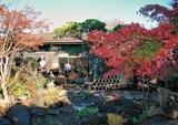 植木屋の庭がカフェに