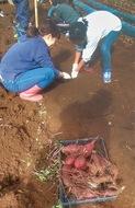 収穫の喜び児童ら実感