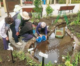 分庁舎前に完成した池にメダカを放流する「藤沢メダカの学校をつくる会」の運営委員