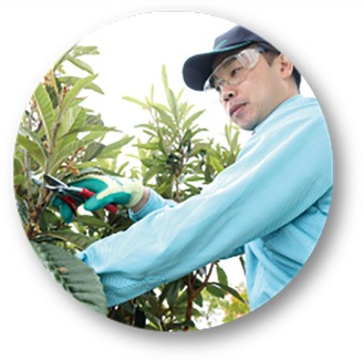 庭木のプロが対応