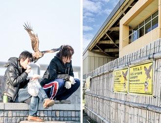 背後から観光客の食料を奪うトビ(神奈川野生動物救護連絡会提供)と片瀬海岸沿いに掲示された注意喚起ポスター