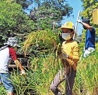 たわわに実った稲を収穫する児童ら