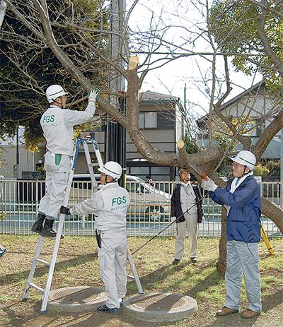 桜の木を治療