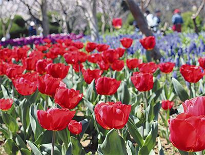 春の景色をお届け