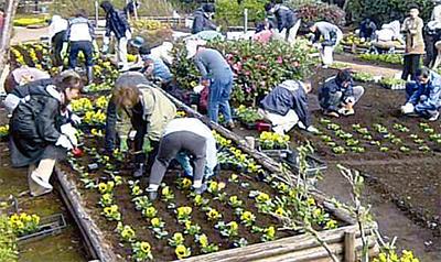 花の苗2850鉢寄贈