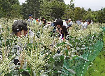 収穫体験に900人超