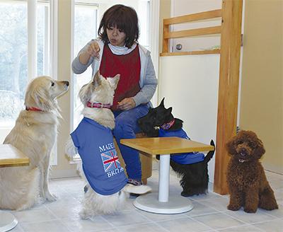 犬の快適ホテルがオープン