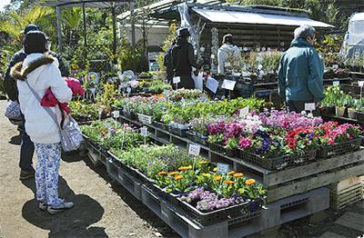 多様な植物を即売