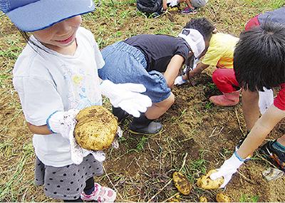イモ掘りで子どもと交流