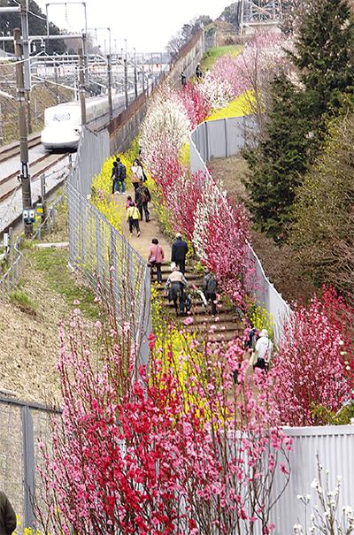 花桃の里「春感じて」