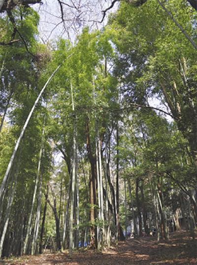 遠藤健康の森で竹炭祭