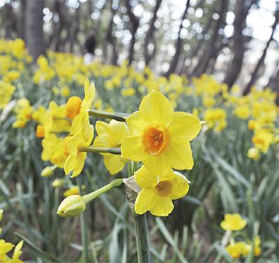 黄色い花可憐に
