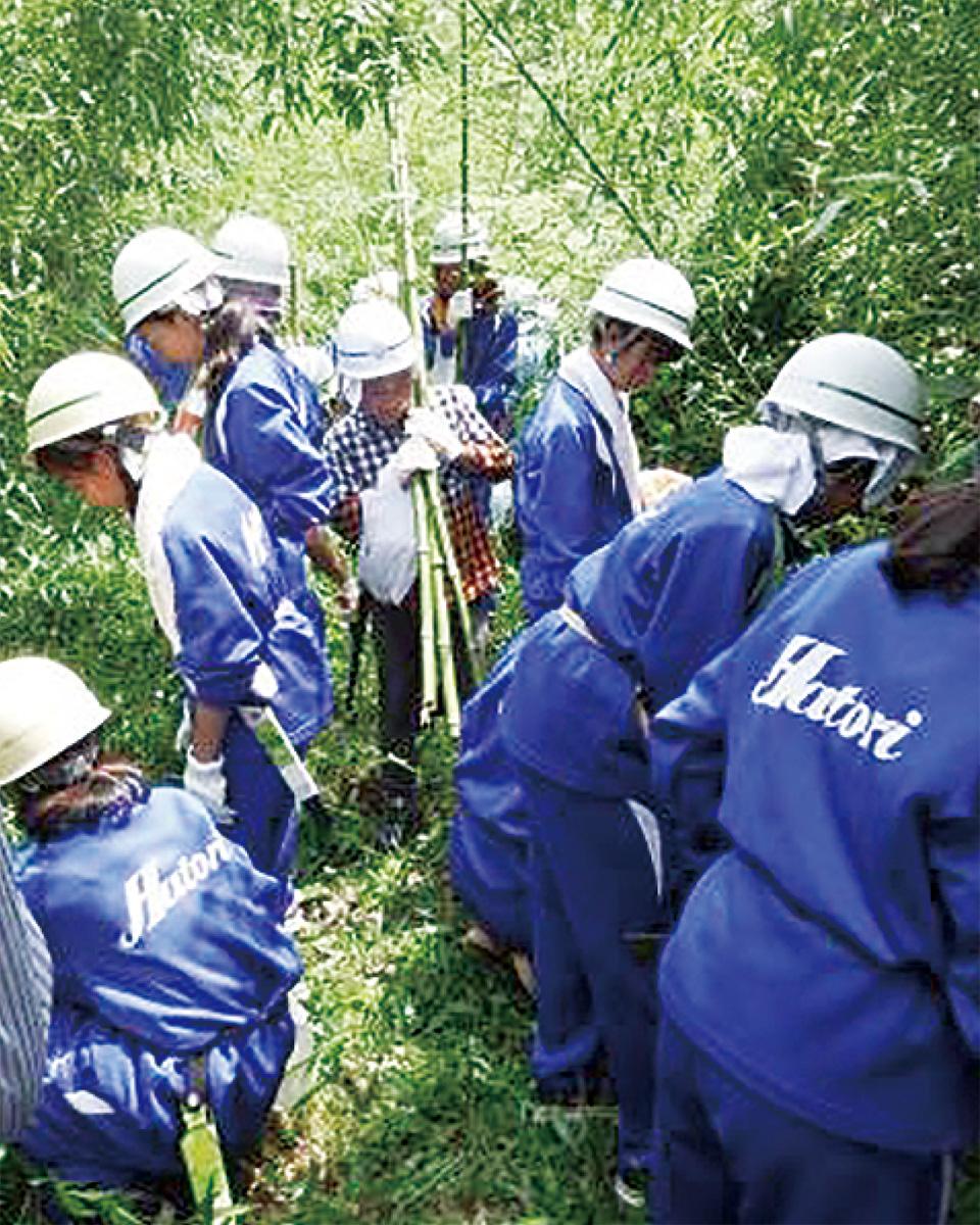 竹の伐採に挑戦
