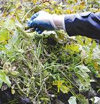 きな粉の原料の「たのくろ豆」も栽培