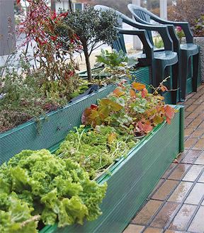 市役所前をにぎわすキャベツなどの野菜
